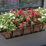 Container gardening hanging basket surrey langley