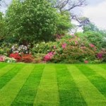 Lawn and garden tips
