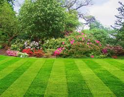 5 Steps To a Good-Looking Lawn and Garden