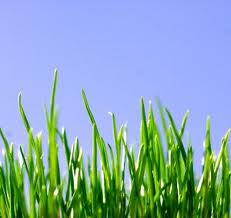 Lawn Care Tips: How To Keep Your Lawn Green and Healthy